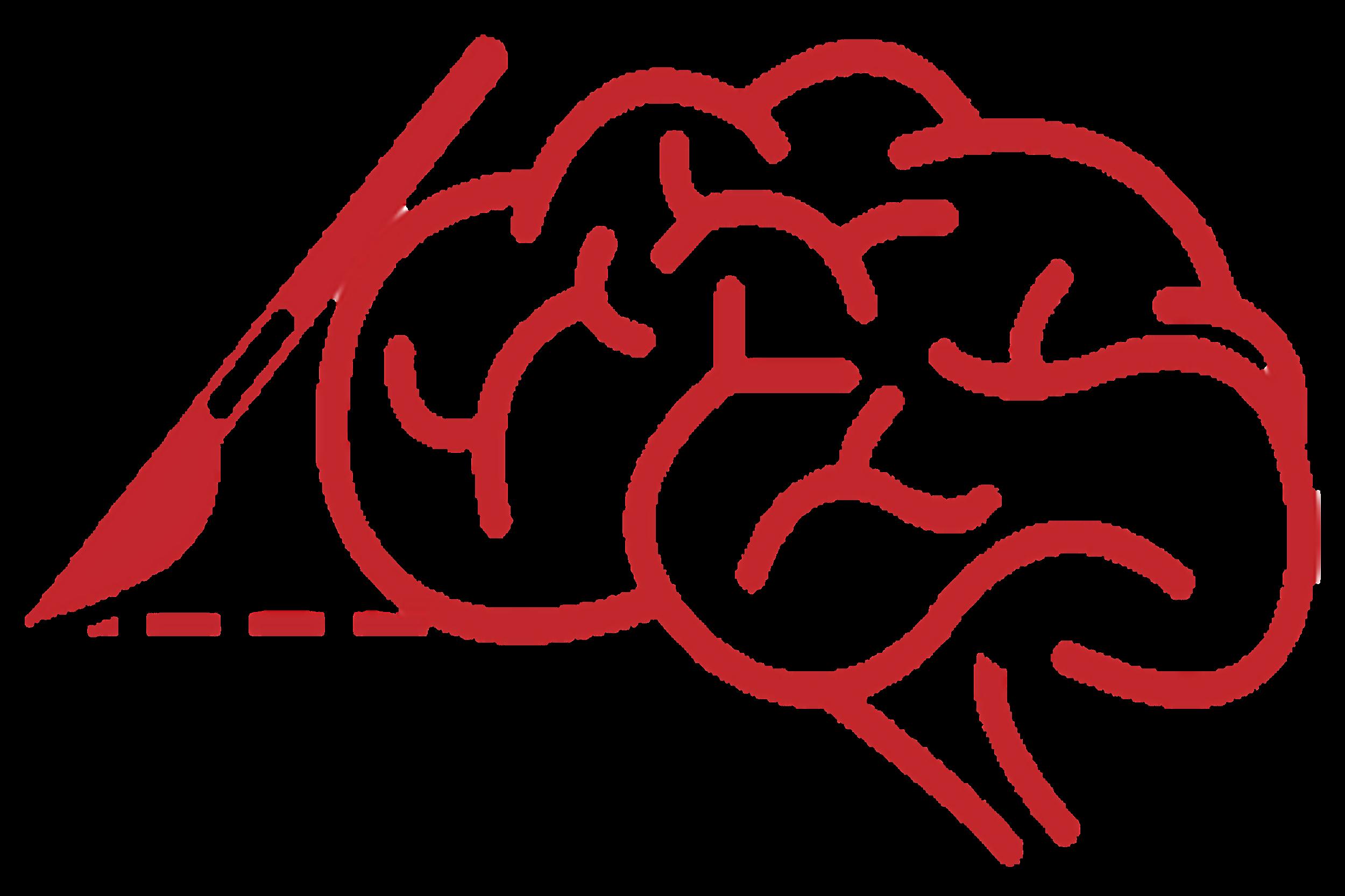 SKN Neurochirugiczne